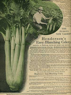 Heirloom Celery Seed