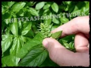 Basil Seed Pod